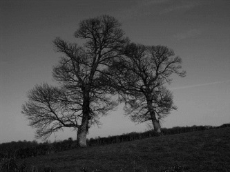 Photo deux arbres par Brahmadev, Infinite Love