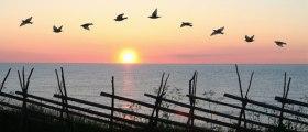 pensées, commes des oiseaux dans le ciel
